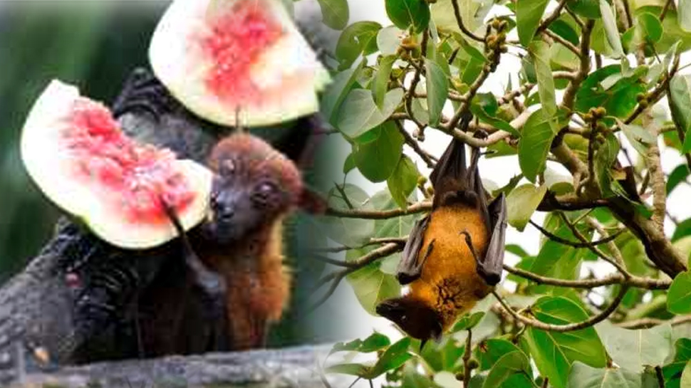 Nipah contained says minister