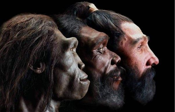 primitive humans Homo Erectus