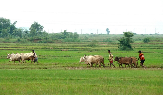 Acidic soil, Acidic soil, poor cattle feed obstacles in farming: Scientists