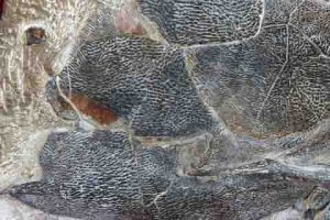 518 million years old soft tissues found in China
