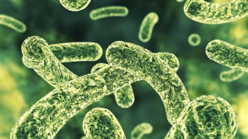 Probiotic bacteria can damage the gut