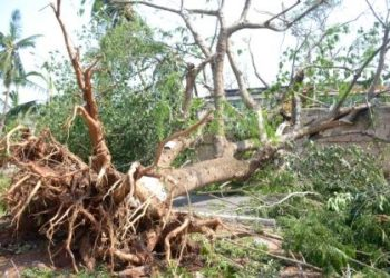 FANI: An uprooted tree in PMG area