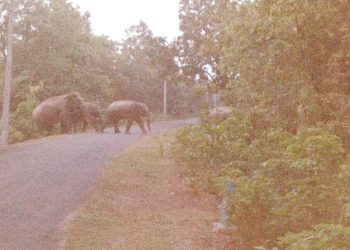 Jharkhand jumbos back in Nilgiri, people panicky