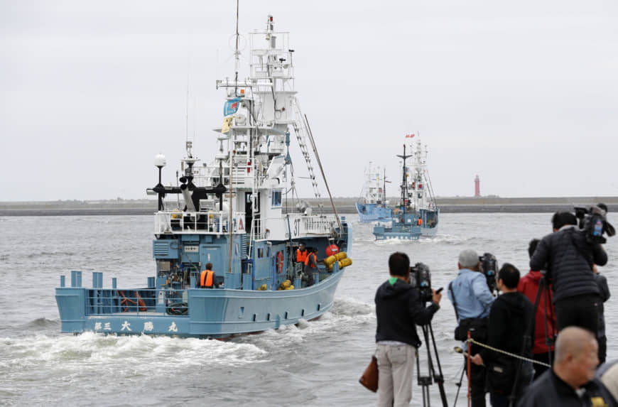 Japan Resumes Commercial Whale Hunting 30 Years After 'Stopping'